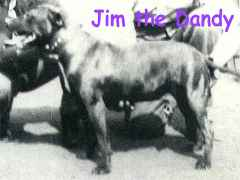 Jim the Dandy